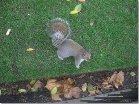 esquilo2